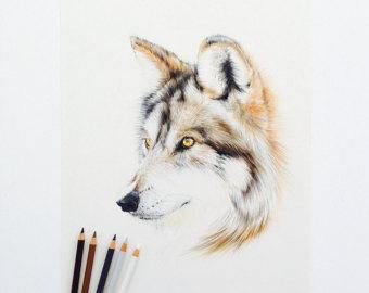340x270 Pencil Drawings Amp Illustrations Etsy Au