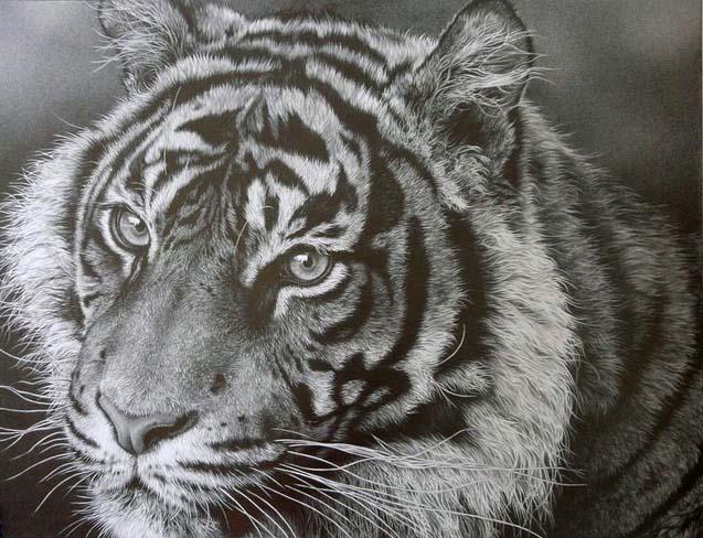 637x488 Pictures Wildlife Pencil Artists,