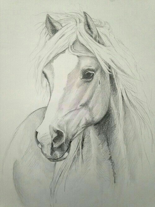 500x667 Drawing, Horse, And Animal Image Paintings
