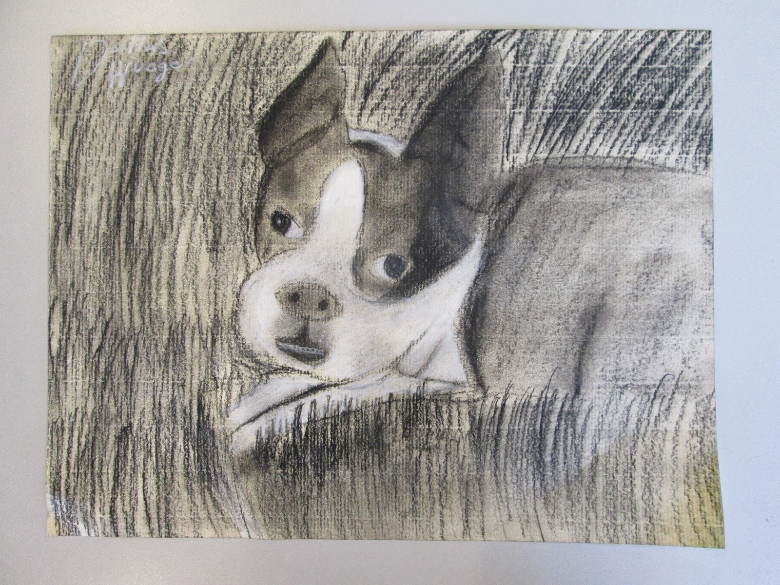 1600x1200 7th Painting And Drawing Charcoal Animal Drawings Columbia