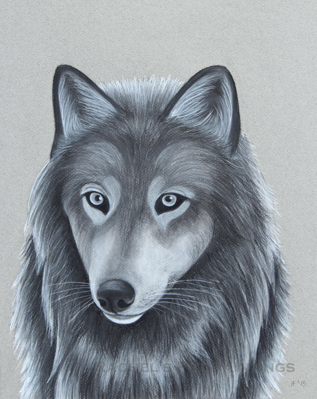 1191x1500 Grey Wolf Drawing Wolf Art Print 8x10 Print 11x14 Print Animal
