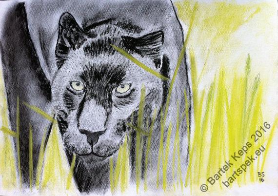 570x402 Large Original Puma Drawing Black Panther Animal Charcoal