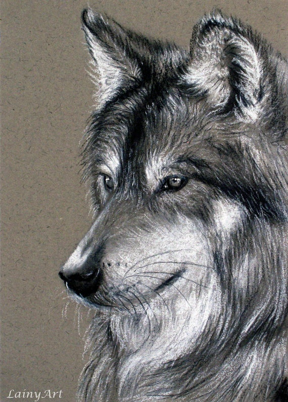 570x797 Pictures Charcoal Drawings Of Animals,