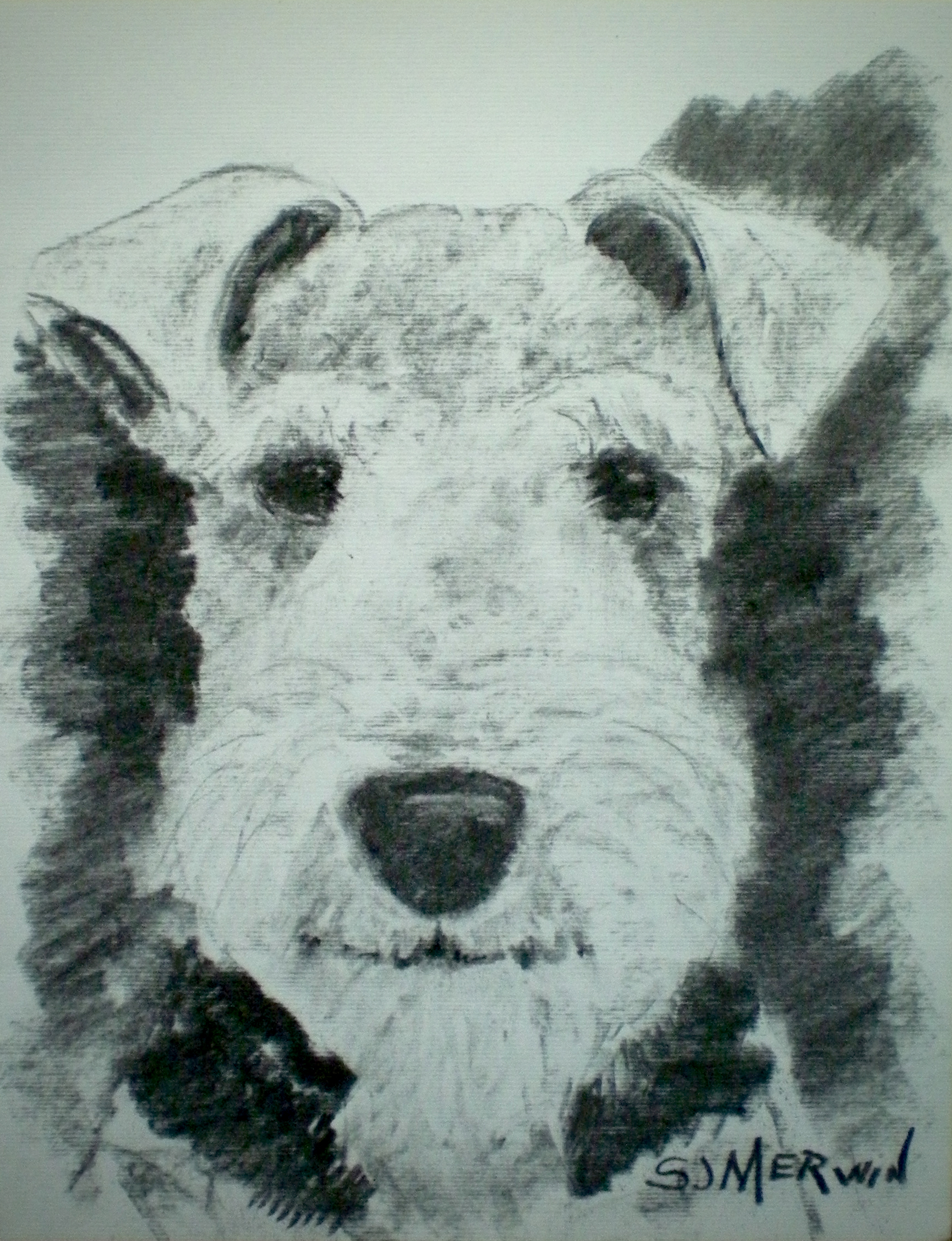 1730x2255 Quintessential Welsh Terrier