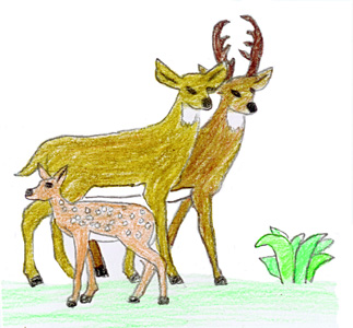 323x300 drawing conclusions about our relationship with animals - Pictures Of Animals For Kids