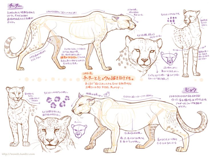 Animal Drawing Tips at GetDrawings.com | Free for personal use ...