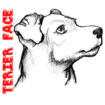 350x350 Learn How To Draw A Realistic Terrier's Face With The Following
