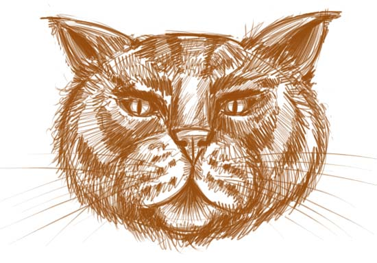 550x384 To Draw A Cat Face