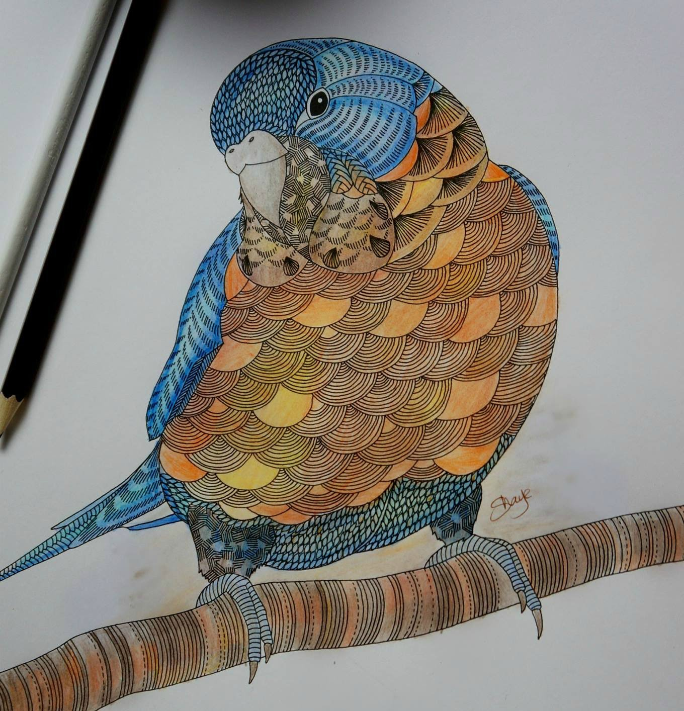 1360x1414 Millie Marotta39s Animal Kingdom Bird Colouring With Vaseline