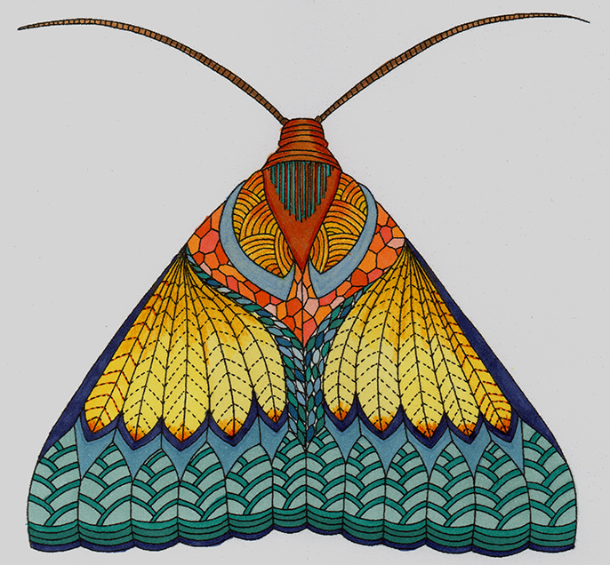 686x636 Moth Colouring Page From Animal Kingdom By Millie Marotta