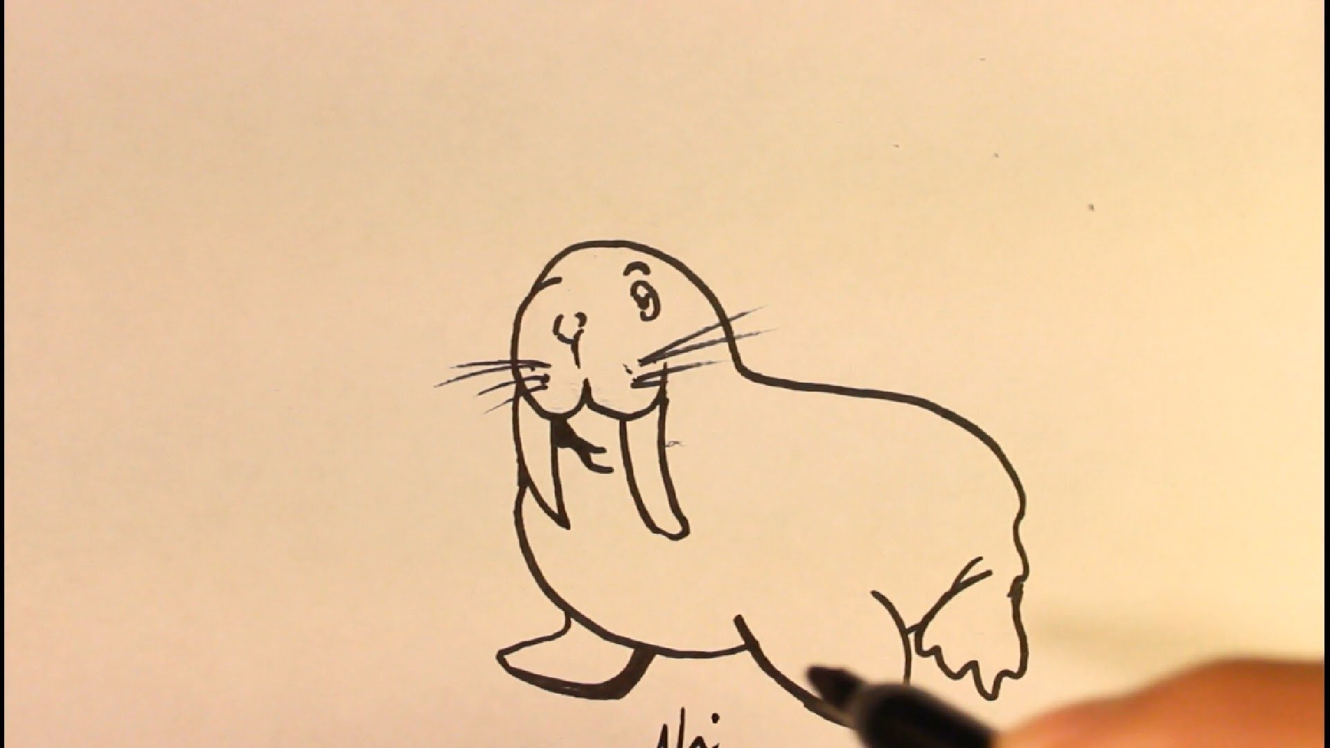 1920x1080 How To Draw Cartoon Walrus Easy Step By Step Drawing Tutorial