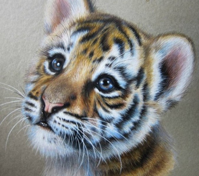 660x586 15 Beautiful And Realistic Animal Pencil Drawings By Kate Mur