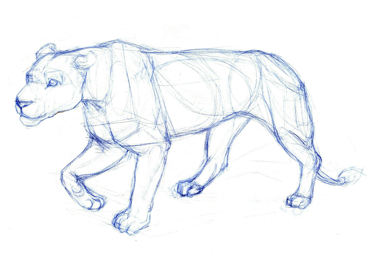 1600x1095 Animals Sketches Pencil Easy Easy Animal Pencil Drawing Blue