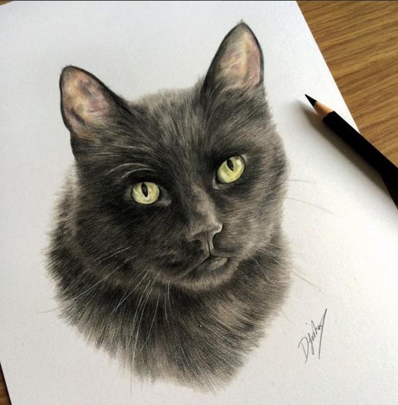 572x583 Incredible Animal Pencil Drawings By British Artist Danielle