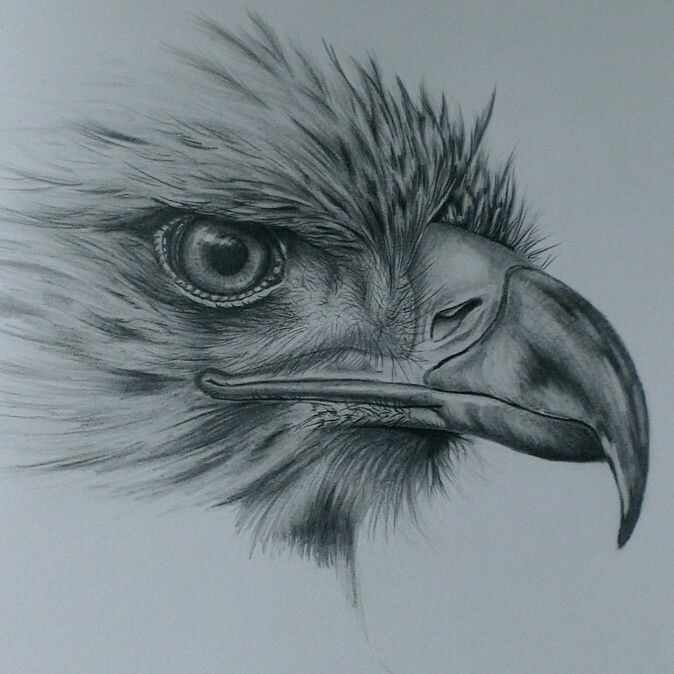 674x674 Photos The 25 Best Animal Pencil Drawings Ideas