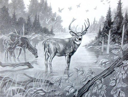500x377 Pics For Gt Deer Pencil Sketch Animal Art Animal