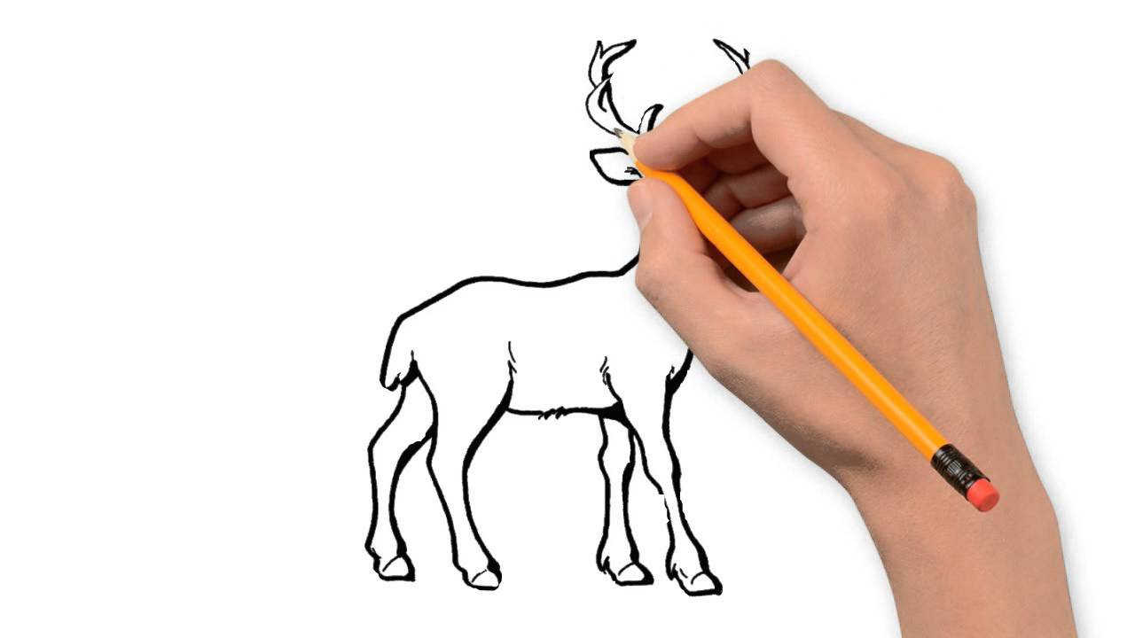 1280x720 Deer Animals Pencil To Draw Step By Step