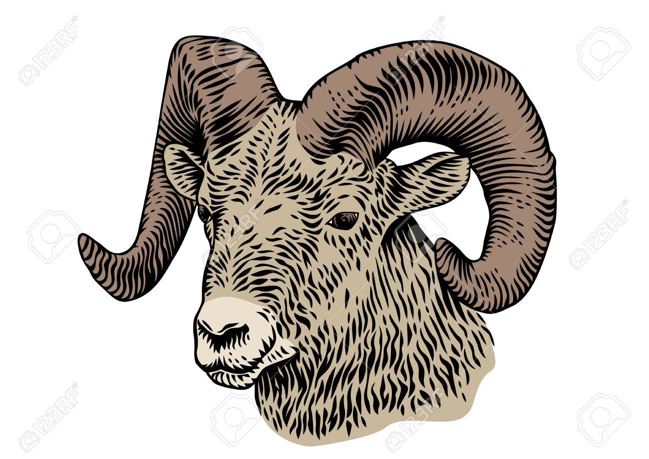1300x919 Drawing Of Horned Head Of Ram On The White Background Royalty Free