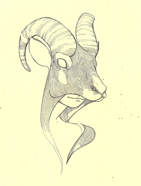 455x600 Ram Art Print Horns Of All Sorts Drawing Projects