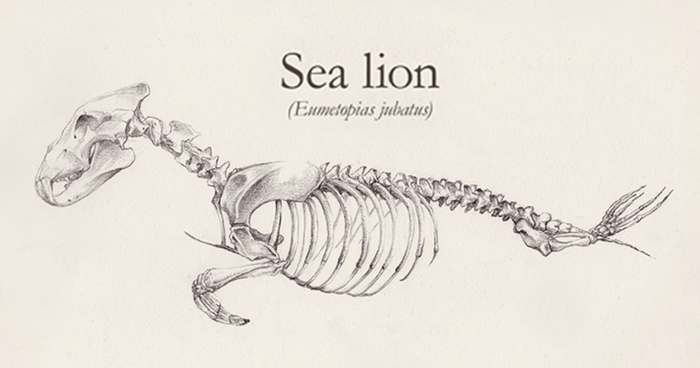 Animal Skeleton Drawing at GetDrawings.com | Free for personal use ...