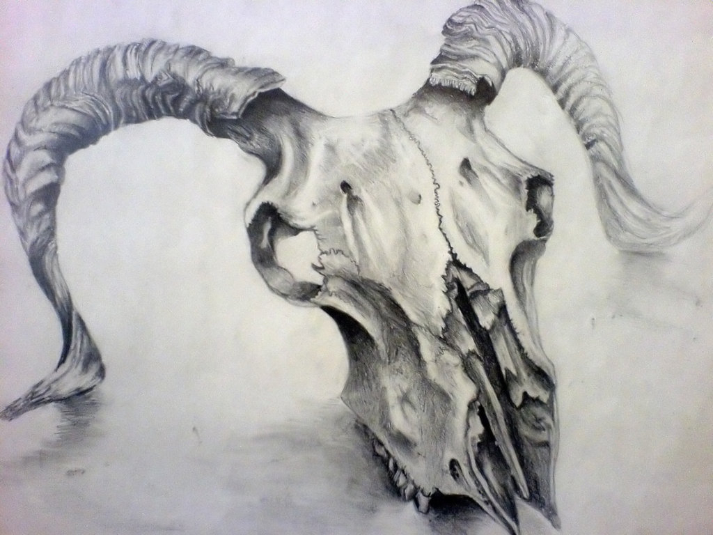 1024x768 Animal Skull Drawing Animal Skull Drawing 1000 Images About Skull