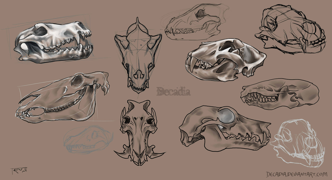 1280x697 Animal Skull Drawing Skulldrawing Explore Skulldrawing