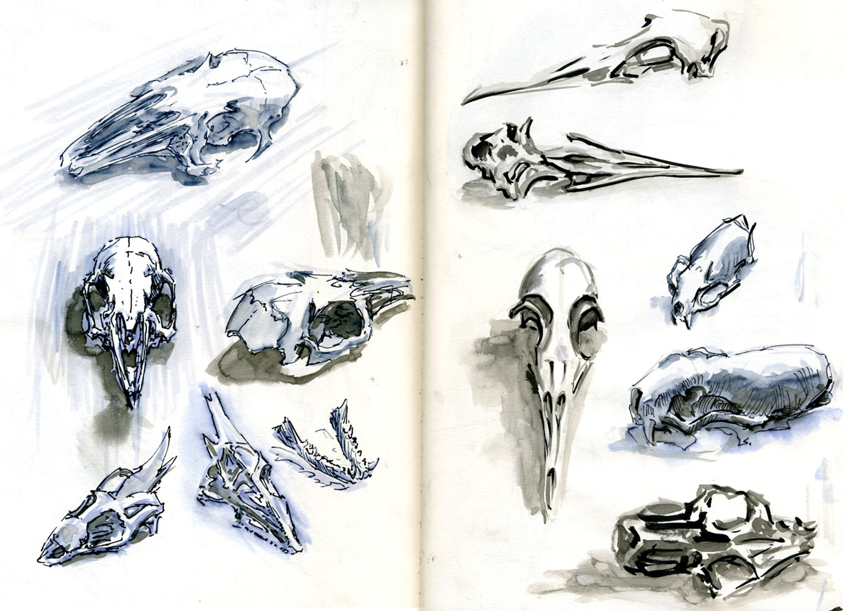 1200x869 Small Fluffy Animal Skulls By ~ With Thanks To Nicoll