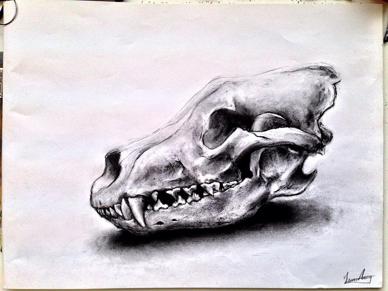 1280x960 Animal Skull Drawings