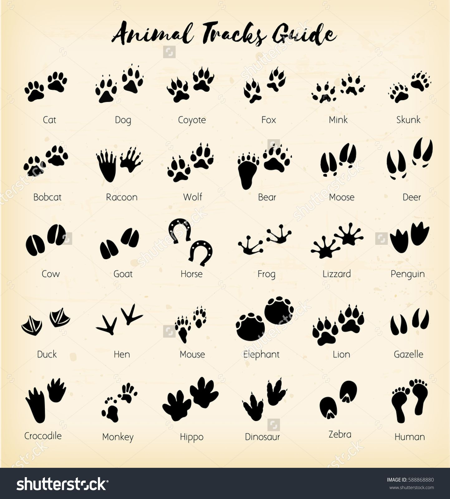 graphic regarding Printable Animal Footprints named Animal Songs Drawing at  Cost-free for specific
