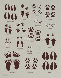 236x300 Wild Animal Footprints Animal Tracks With Front And Rear, Left