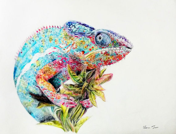 570x436 Colored Pencil Drawing Chameleon Original Animal By Naturedrawings