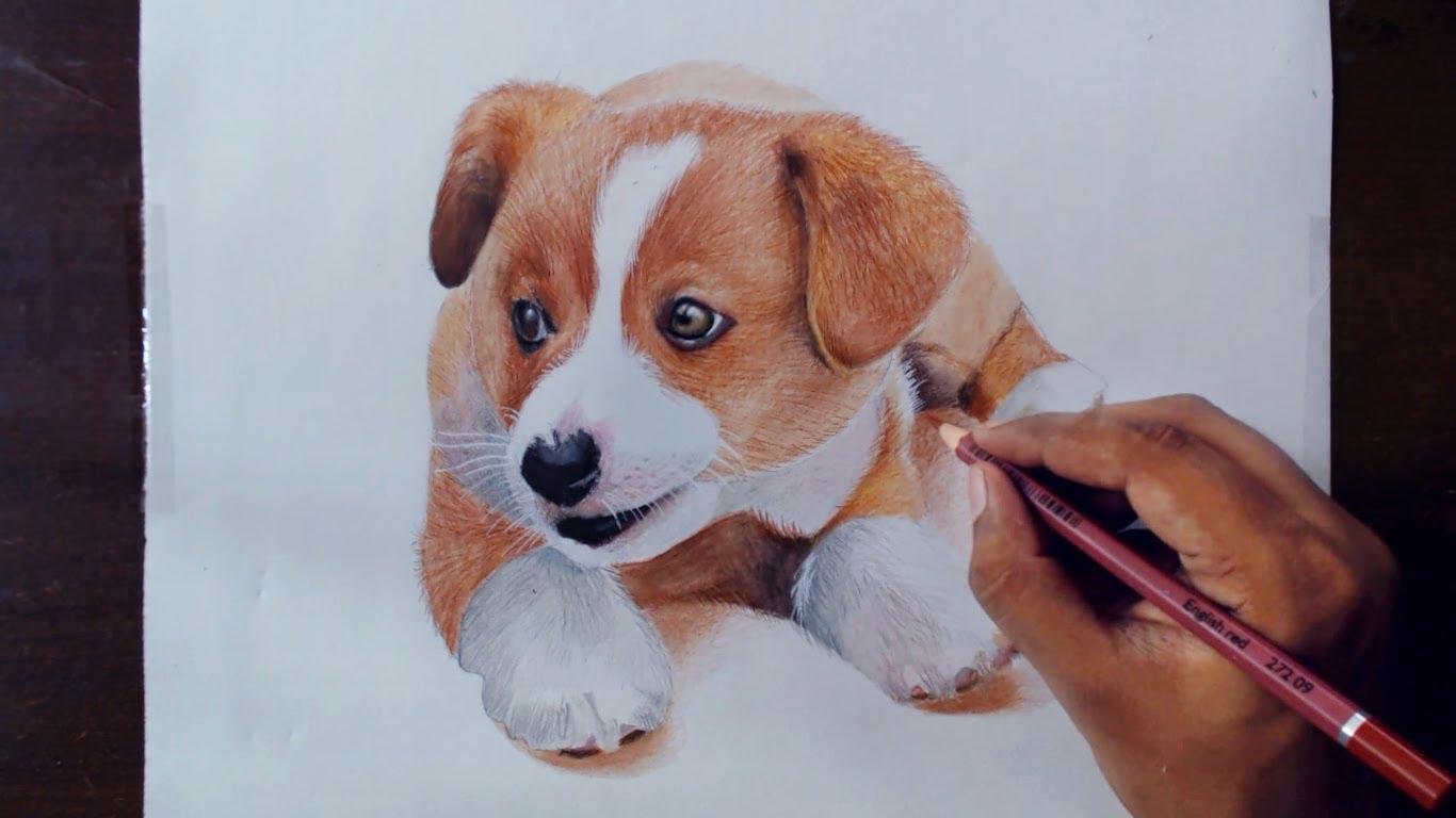 1366x768 Drawing Animals 2