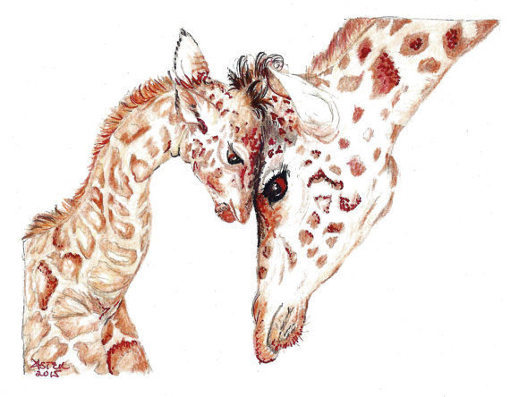 570x444 Giraffe Drawing Baby Animals And Their Mothers Animals Drawing
