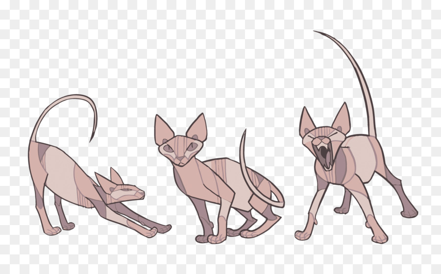 900x560 Sphynx Cat Donskoy Cat Kitten How To Draw Animals Drawing