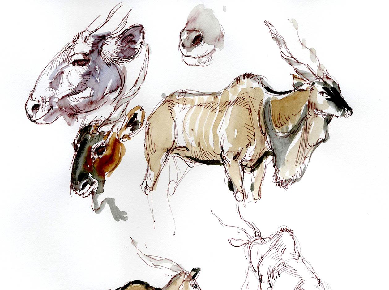 1258x938 Animal Drawing With Glenn Vilppu Spring 2017 Art Mentorsart Mentors