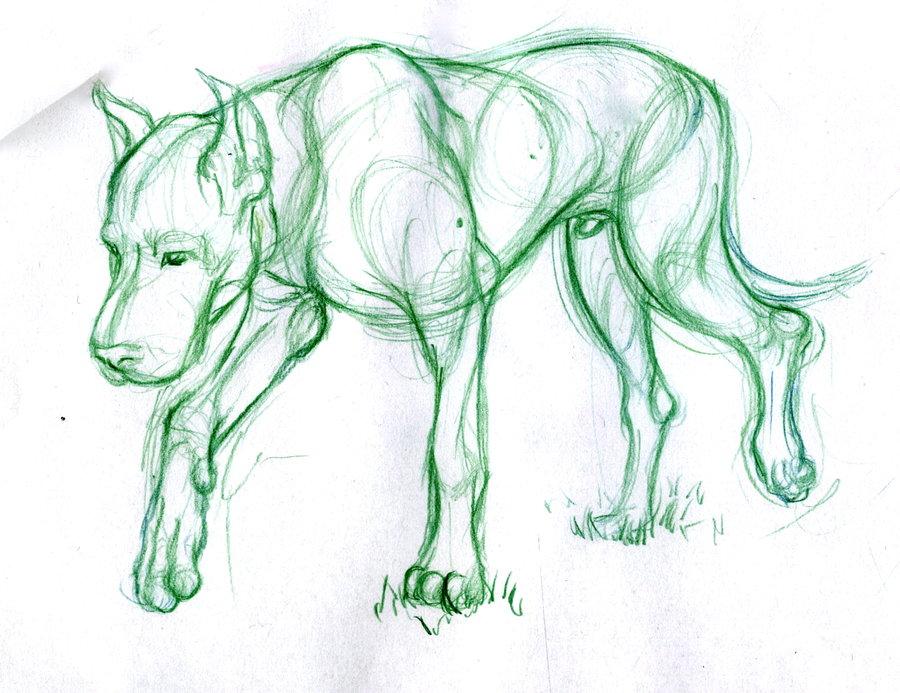 900x693 Animal Drawing 1 Sheridan Portfolio By Paraguaydraw