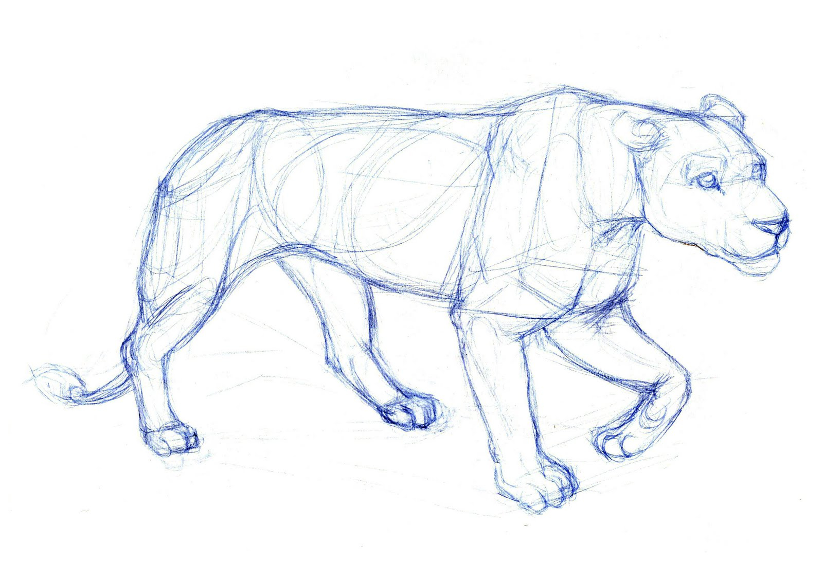 1600x1095 Animals Drawings In Pencil Easy Easy Animal Pencil Drawing Blue