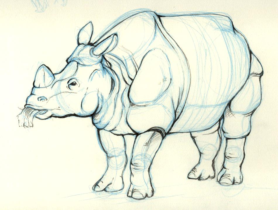 950x718 Rhino Animal Drawing 1 By Jermmgirl