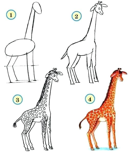 505x604 Drawing Zoo Animals Draw Wildlife Animals Giraffe Zoo Animals