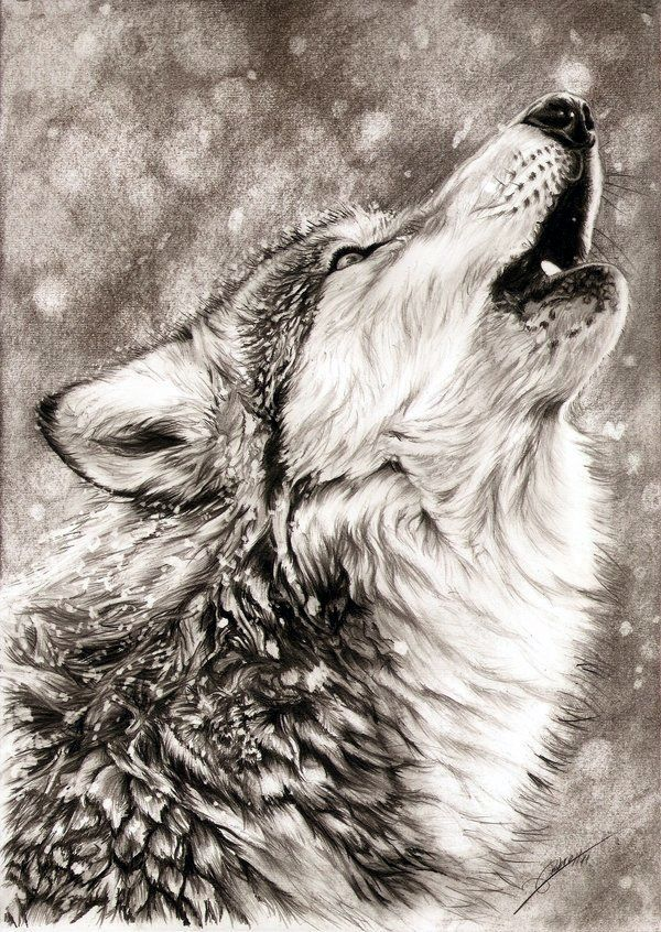 600x846 Pictures Animals Pencil Drawing,