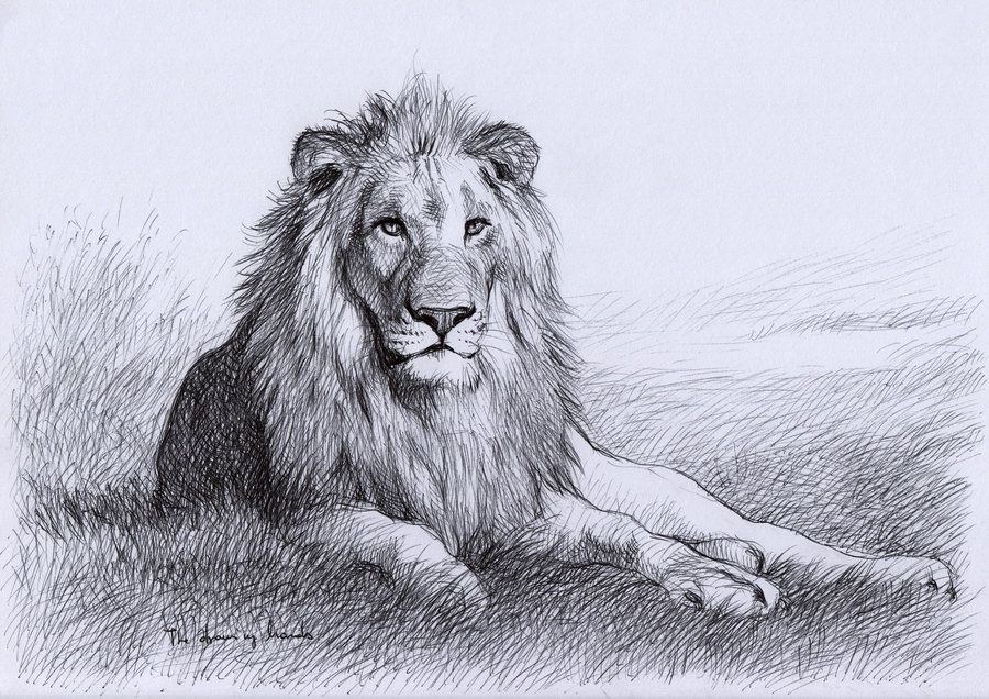 900x636 Resting Lion By ~thedrawinghands On Sketches