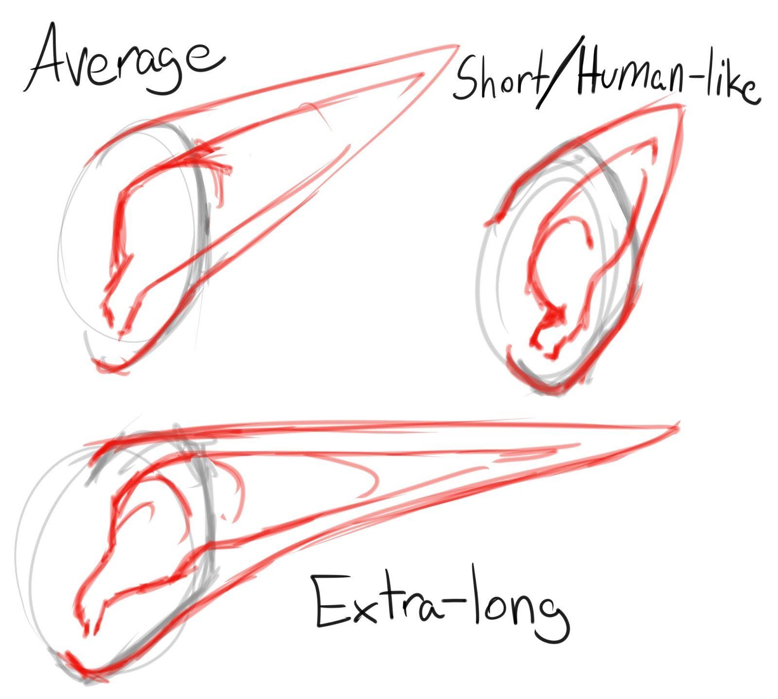 1600x1439 Elf Ears Drawing