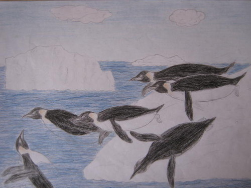 500x375 Drawing Images A Picture From Antarctica Wallpaper And Background