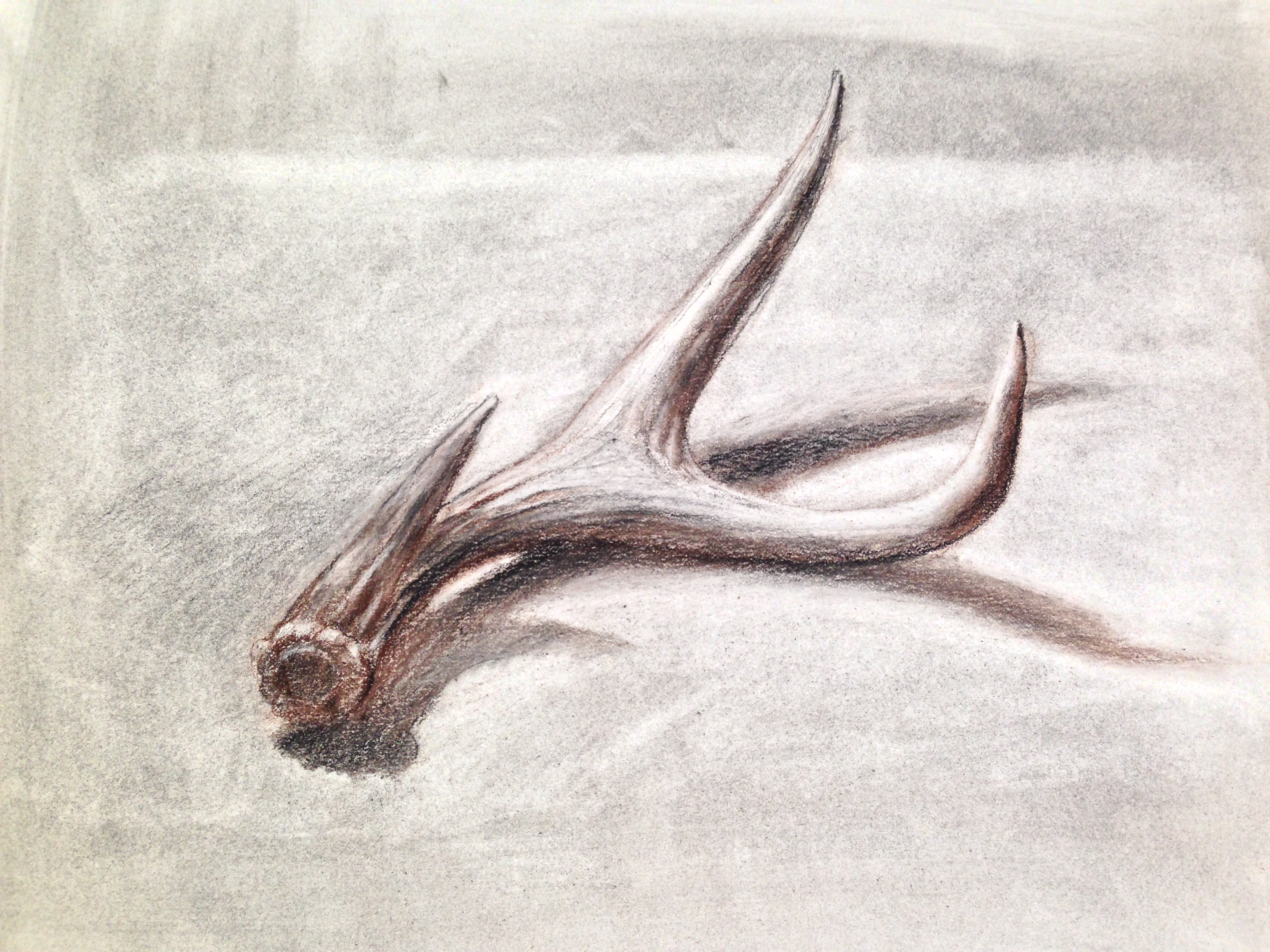 3264x2448 Drawing Antlers In Black, White And Sepia Charcoal. Tucson