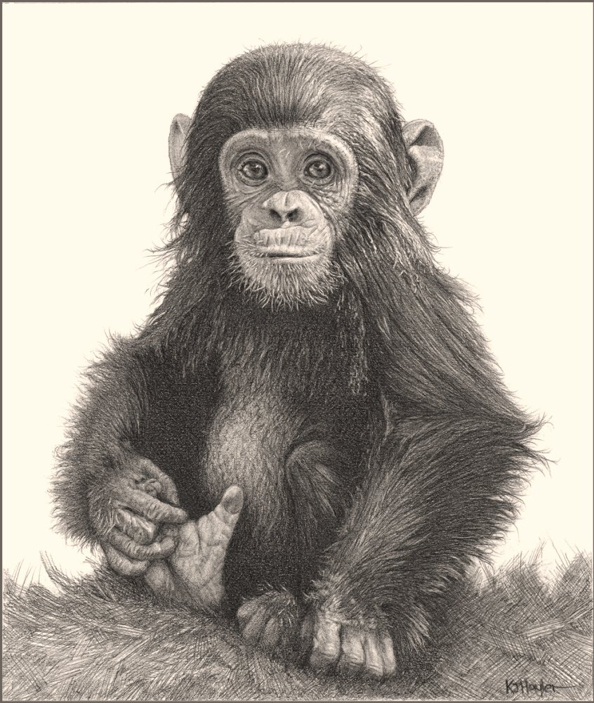 Ape Drawing At Getdrawings Com Free For Personal Use Ape