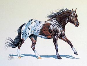 300x230 Appaloosa Horse Drawings Fine Art America