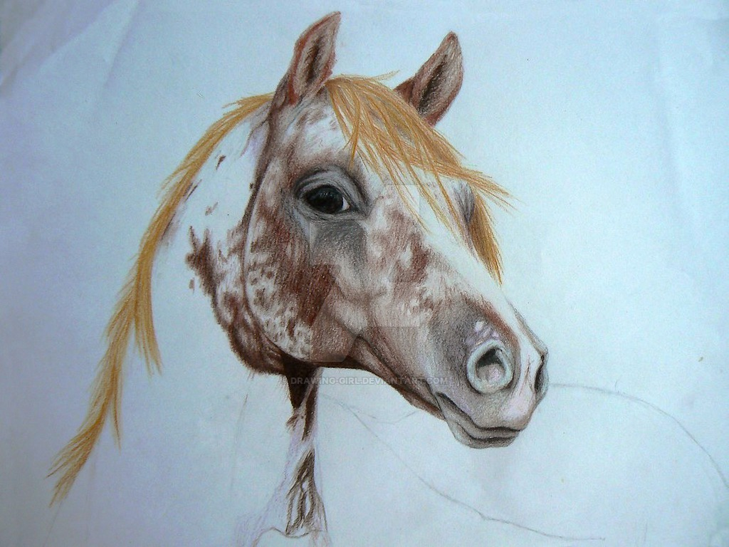 1024x768 Appaloosa By Drawing Girl