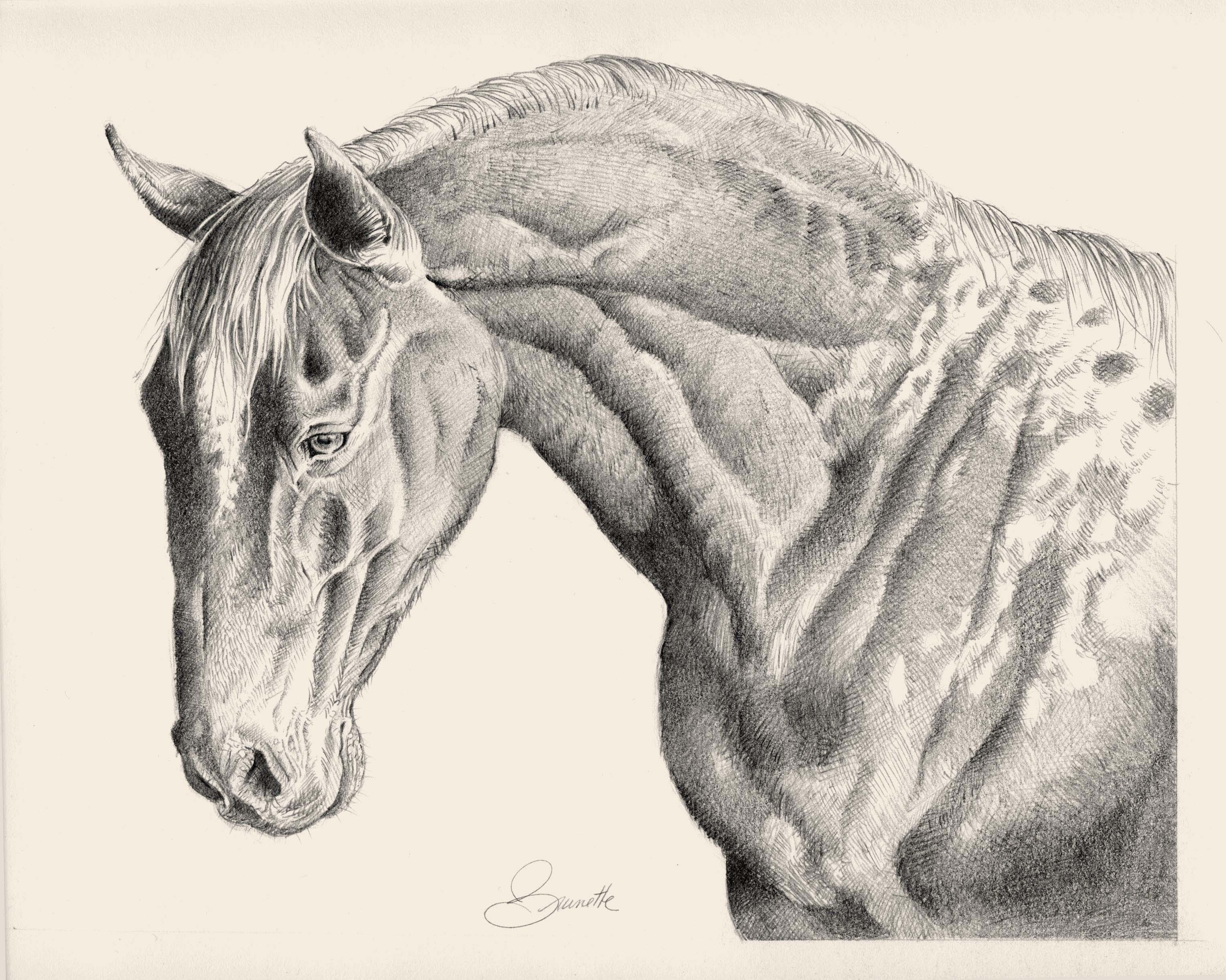 3055x2442 Appaloosa Horse Pencil Drawing By Jean Brunette Drawings