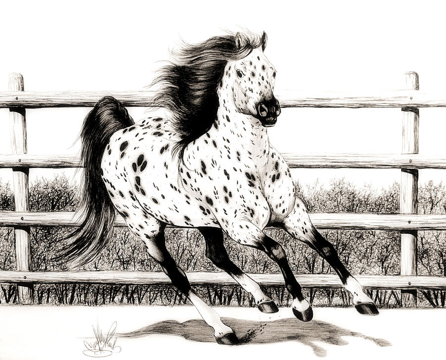 900x727 Leopard Appaloosa Loping Drawing By Cheryl Poland
