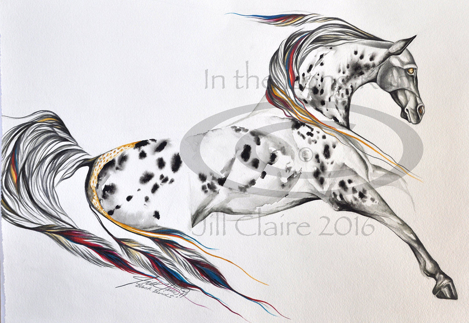 Appaloosa Horse Drawing at GetDrawings.com | Free for personal use ...